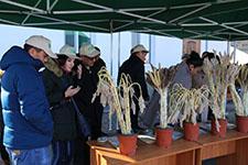 AMEA Botanika İnstitutunun gənc mütəxəssisləri Beynəlxalq treyninqdə iştirak etdilər