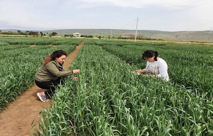 MBBİ-nin əməkdaşları Qobustanda tədqiqat aparıblar
