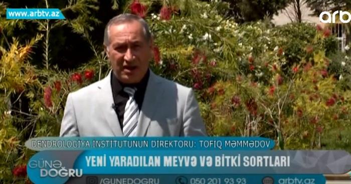 AMEA-nın müxbir üzvü Tofiq Məmmədov ARB TV-yə Azərbaycanda yaradılan yeni meyvə və bitki sortlarından danışıb